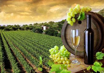 В сфере виноделия сейчас действует порядка 20 предприятий, где работают более 520 человек.