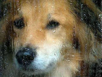Жил-был пес... звали его HILO.