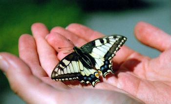 12 апреля  в Армении впервые откроется выставка живых тропических бабочек, которая предоставит уникальную возможность окунуться в волшебный мир прекрасных легкокрылых созданий, обитающих на  разных континентах. Всего за один месяц посетители необычной выставки станут свидетелями рождения бабочек из коконов, смогут понаблюдать за их питанием, воздушными играми, вольным порханием буквально перед глазами и даже сделать незабываемые фотоснимки на память.