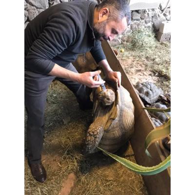 Карен Мартиросян - океан любви к животным и людям